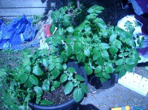 garden070508 005