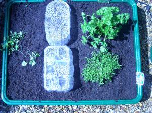 garden070508 007