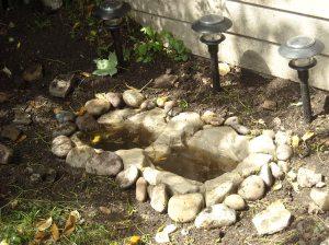 garden&pond260509 001