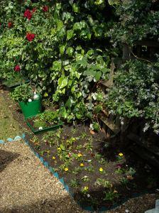 garden&pond260509 006