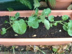garden070609 004